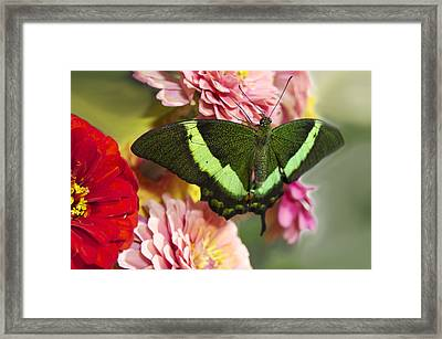 Green Butterfly Framed Print by Art Spectrum