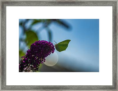 Green Butterlfy Framed Print by Melisa Gumbs