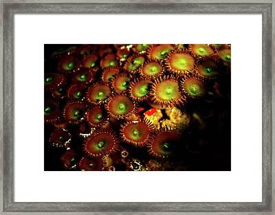 Green Button Polyps Framed Print
