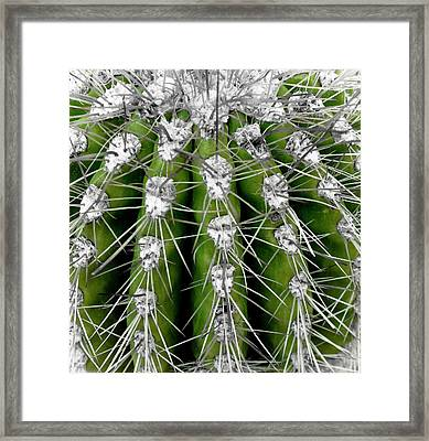 Green Cactus Framed Print