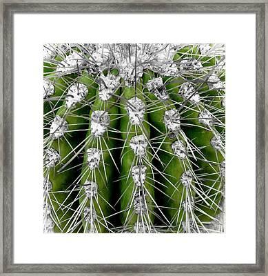 Green Cactus Framed Print by Frank Tschakert