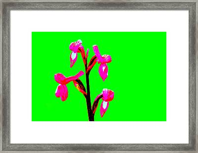 Green Champagne Orchid Framed Print