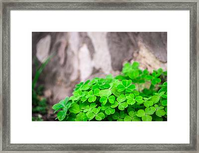 Framed Print featuring the photograph Green Clover And Grey Tree by John Williams