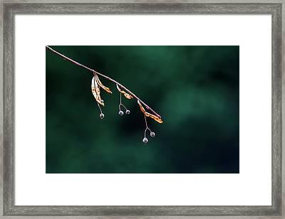 Green Contrast Framed Print by Vincent Pelletier