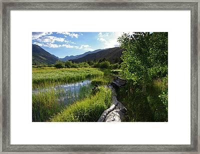 Green Creek Meadow Framed Print