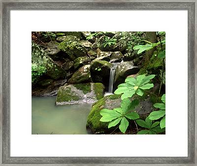 Green Framed Print by Curtis J Neeley Jr