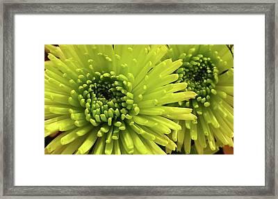 Green Delight Framed Print