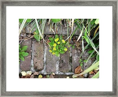 Green Door 16 Framed Print by Tom Hefko