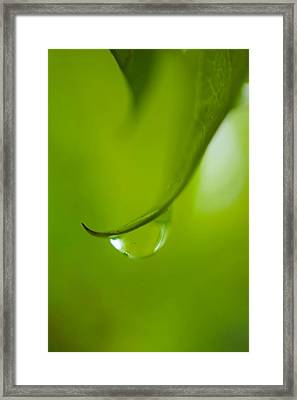 Green Drop Framed Print