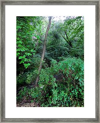 Green Earth Framed Print by Mindy Newman
