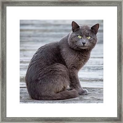 Green Eye Stare Cat Square Framed Print by Terry DeLuco