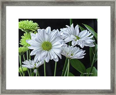 Framed Print featuring the photograph Green Eyed Daisy by Bonnie Willis