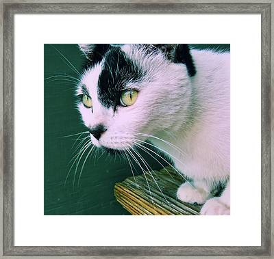 Green Eyed Framed Print by JAMART Photography