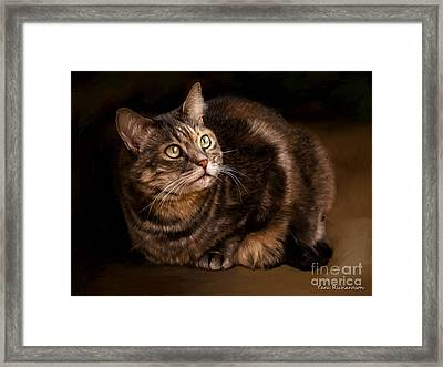 Green Eyed Kitty Framed Print