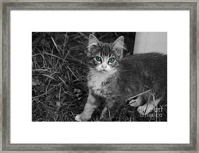 Green Eyed Lady Framed Print by The Stone Age