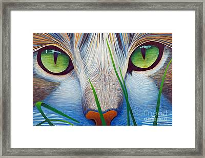 Green Eyes Framed Print by Brian  Commerford