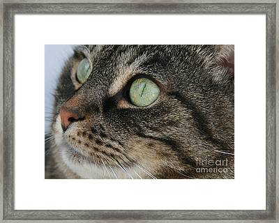 Green Eyes Framed Print by Debra Straub