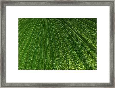 Green Fan -  Framed Print by Georgia Mizuleva
