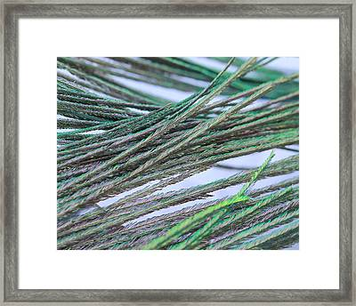 Green Feathers Framed Print