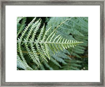 Green Fern Framed Print by Deborah Brewer