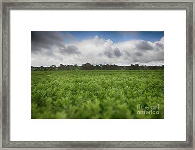 Framed Print featuring the photograph Green Fields 4 by Douglas Barnard