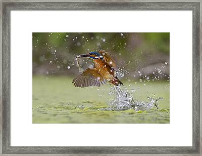Green Fishing Framed Print by Marco Redaelli