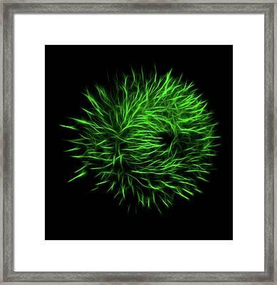 Green Flower Burst Framed Print