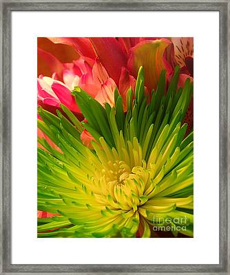 Green Focus Framed Print