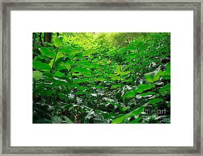 Green Foliage Framed Print by Gaspar Avila