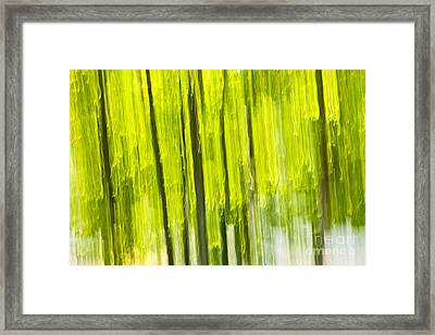 Green Forest Abstract Framed Print