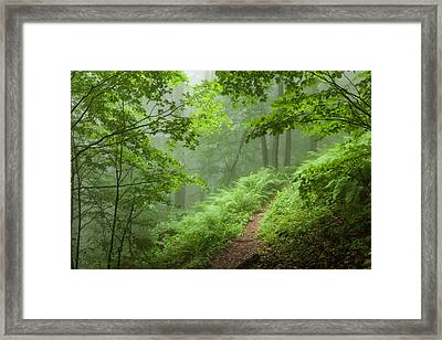 Green Forest Framed Print by Evgeni Dinev