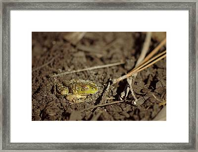 Green Frog Framed Print by Aaron Rushin