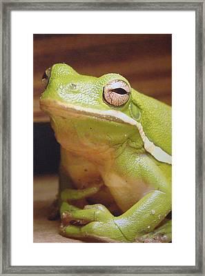Green Frog Framed Print by J R Seymour