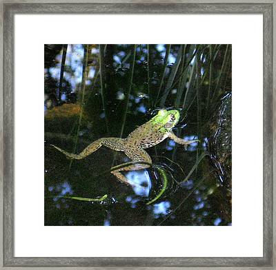 Framed Print featuring the photograph Green Frog by Patricia Januszkiewicz