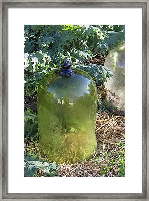 Green Garden Cloche Framed Print