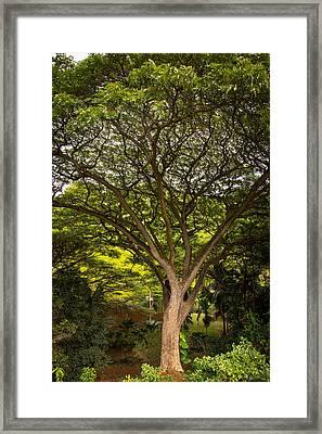 Green Giant Framed Print by Sharin Gabl