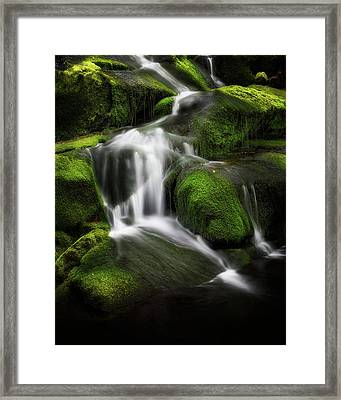 Green Glow Framed Print by Bill Wakeley