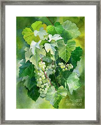 Green Grapes And Leaves Framed Print