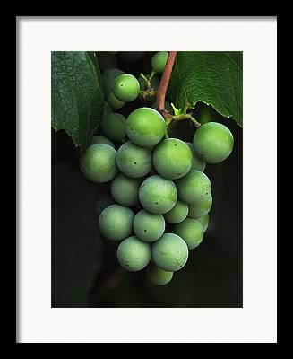 Grape Cluster Framed Prints