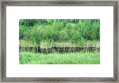 Green Grass Black Water Framed Print