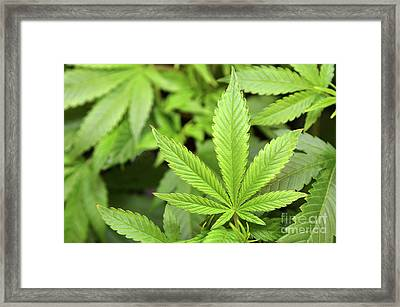 Green Growing Framed Print
