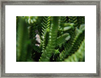 Green Gummies Framed Print