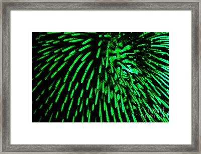 Green Hairy Blob Framed Print by Clayton Bruster