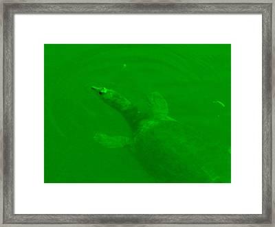Green Hello Turtle Framed Print by Nela n Charlie Nelabooks