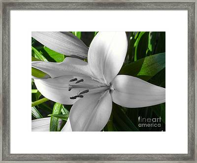Green Highlighted Lily Framed Print