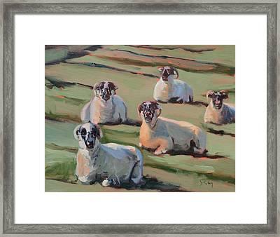 Green Hill Sheep At Rest Framed Print by Donna Tuten