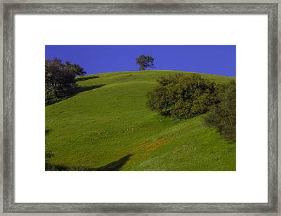 Green Hill With Poppies Framed Print