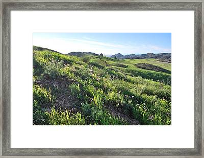 Framed Print featuring the photograph Green Hills Purple Flowers - Rocky View by Matt Harang