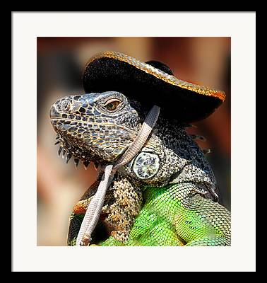 Iguana Mexico Framed Prints