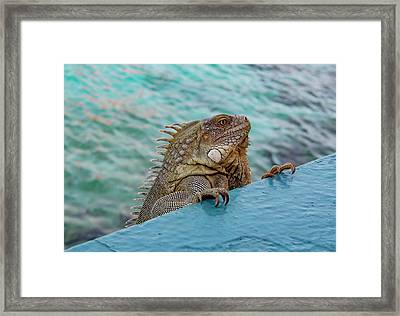Green Iguana Looking Over Wall Framed Print by Jean Noren